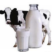 Коровье чал подле сахарном диабете