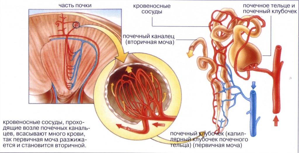 средство от диабета голубитокс